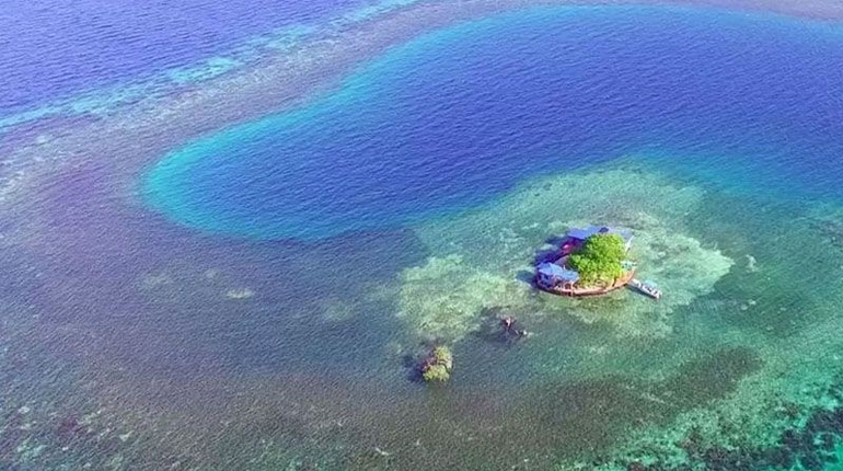 Дом-остров, Вокруг книг